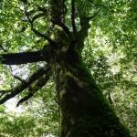 パワースポットの周りに自然や木が多い理由