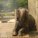 【口コミ】ここが無料の動物園!愛知県の岡崎市岡崎東公園