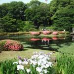 日本有数の強力な龍脈が集う!風水の最強パワースポット【皇居東御苑】