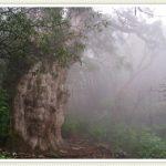 【体験談】誰もが心が研ぎ澄まされる!?絶景の滝と大樹のある屋久島