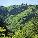 【口コミ】高尾山に行ったら寄ろう!パワースポット「タコ杉」